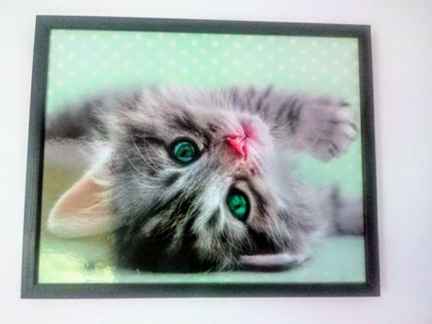 Obraz z kotem