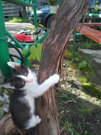 Кошенята хлопчики шукають дім