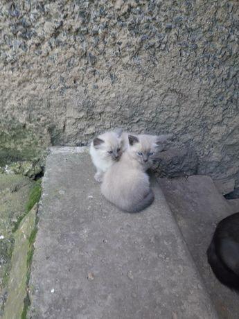 Грайливі, гарні кошенята в самі хороші руки )))