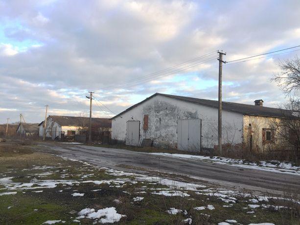 Продам ферму ферма корівник Оренда