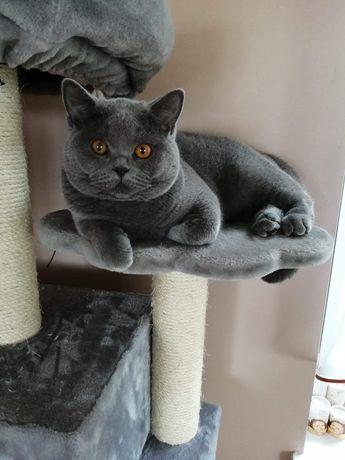 Koty Brytyjskie FPL