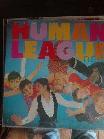 Disco human league