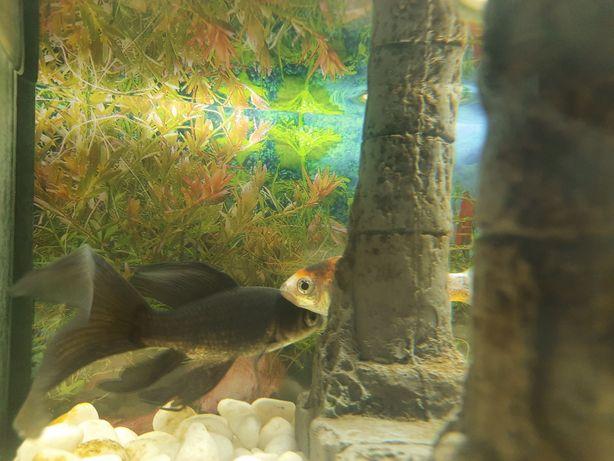 Aquário e 2 peixes
