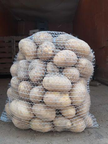 Ziemniaki Tacja,nowa polska odmiana!