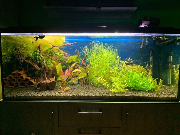 Zestaw Rośliny z przycinki - akwarium 450l