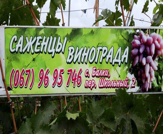 !!САЖЕНЦЫ ВИНОГРАДА!! Черенки! доставка Украина