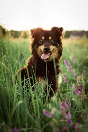 Особенная собака для особенных людей