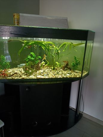 Akwarium narożna 450L