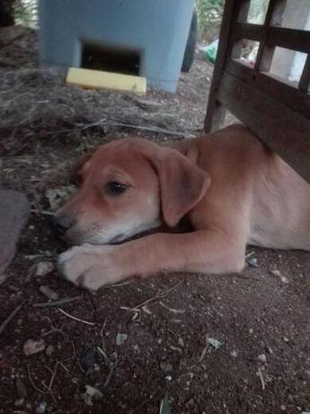 Lindos cachorros para adopção