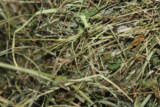 Oddam trawę na siano w zamian za skoszenie 1.5 ha - siano łąkowe