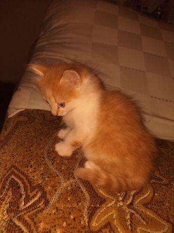 Помогите определить котёнка