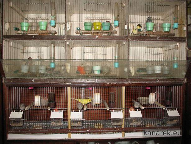 Kanarki Regał Gile meksykańskie Zeberki Mewki japońskie Papugi faliste