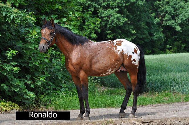 Ogier Ronaldo tarant