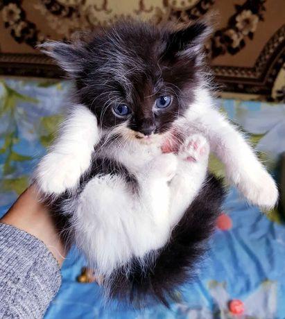 Котенок девочка в майке и шортиках в хорошие руки бесплатно
