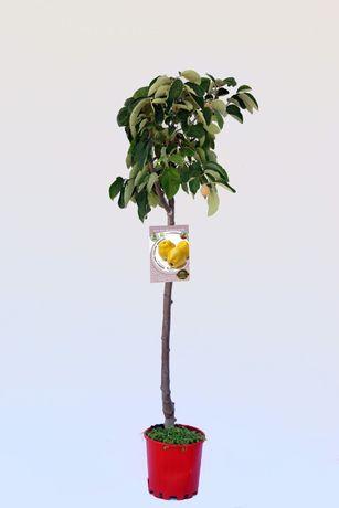 Arvore de fruto - pessegueiro