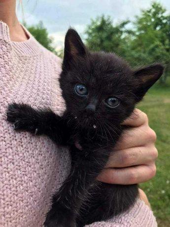 Do adopcji 10 tygodniowe kotki