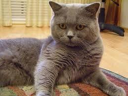 Котик ждет вашу кошечку!