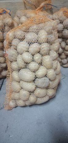 Ziemniaki, odmiana COLOMBA