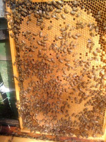 Пчелопакеты,бджолопакети 2021