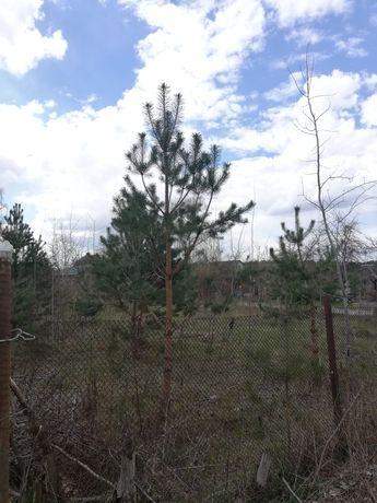 Продам ділянку Нова Українка озеро, ліс