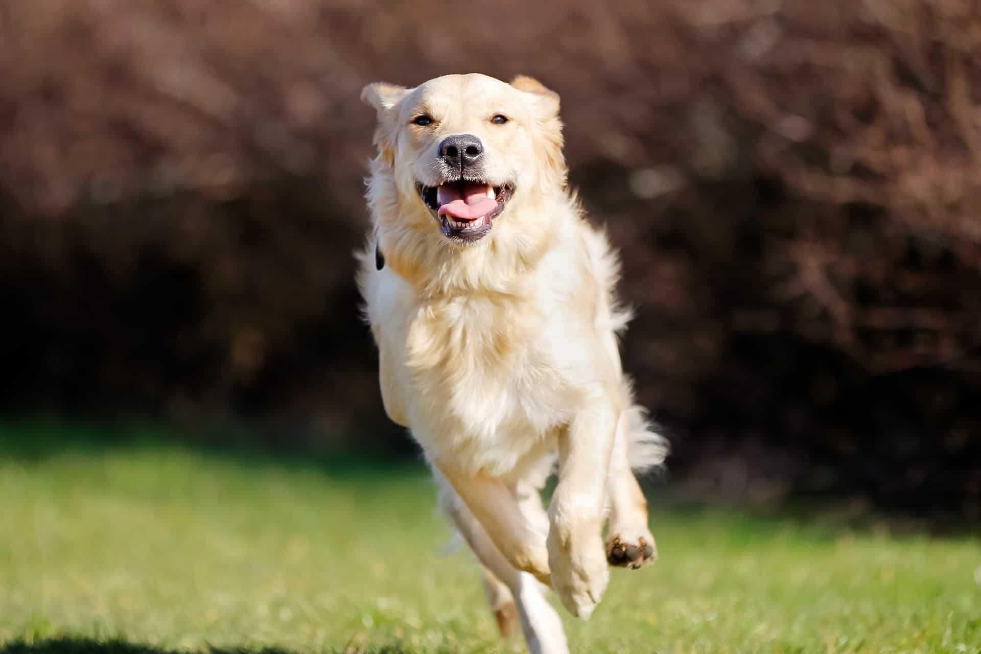Dog Walking - Passeio de Cães