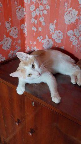 Коты_отдам кота, 1 год, вакцинирован, кастрирован