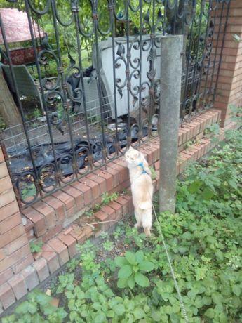 Помогите найти кота!!! Может кто видел?