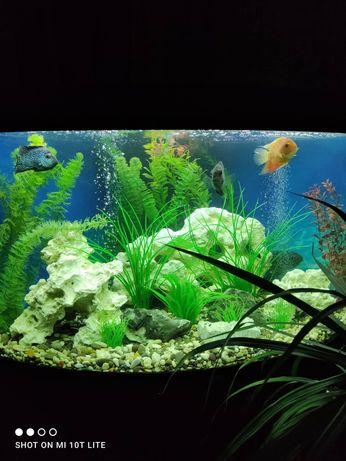 Угловой аквариум JUWEL TRIGON 350