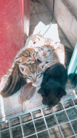 Gatos bebes adoção