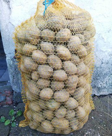 Ziemniaki (sadzeniak, jadalny, paszowy)