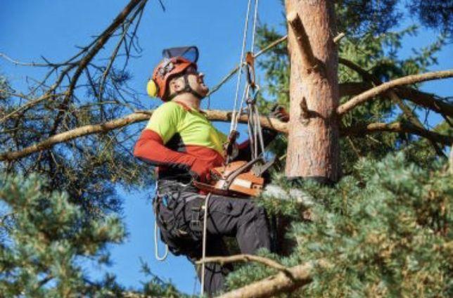 Профессиональный спид деревьев