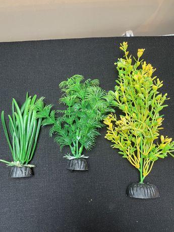 Roślinki rośliny do Akwarium