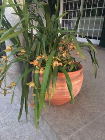 Vasos orquídeas