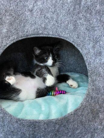 Котенок котик кот кошка ищет дом