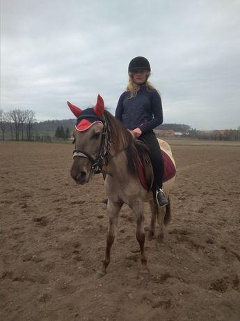 Konie polskie klaczka pod siodło