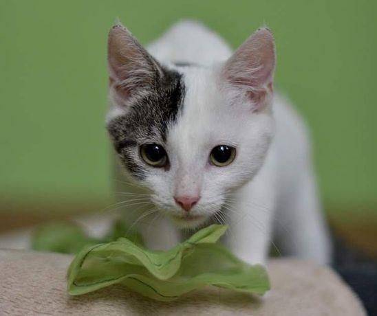 Adoptuj słodką kociusię :)