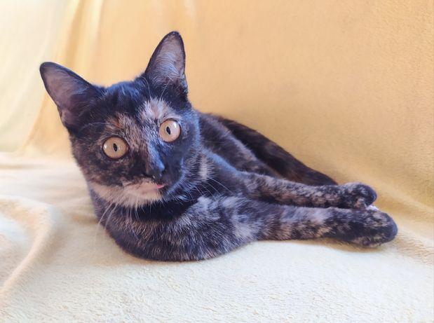 Dwie piękne koteczki do adopcji, trikolorka, szylkretka