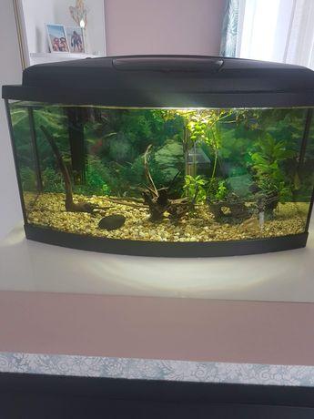 Sprzedam akwarium z rybkami