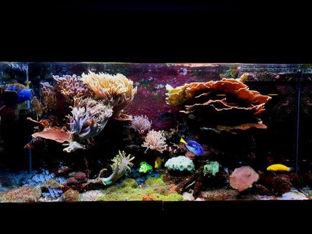 Akwarium Morskie 350l