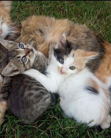 Кошечки, 2.5 месяца