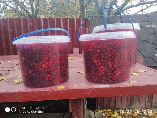 Продам ягоди клюкву
