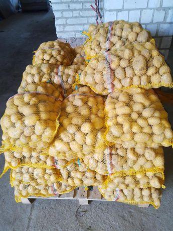 Ziemniaki jadalne Denar