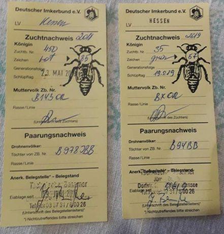 Продам Бджоло матки Бакфаст F1 ПЛІДНІ 2021 року. Ціна 250грн