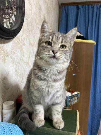 Отдам в хорошие руки кошку 4 месяца