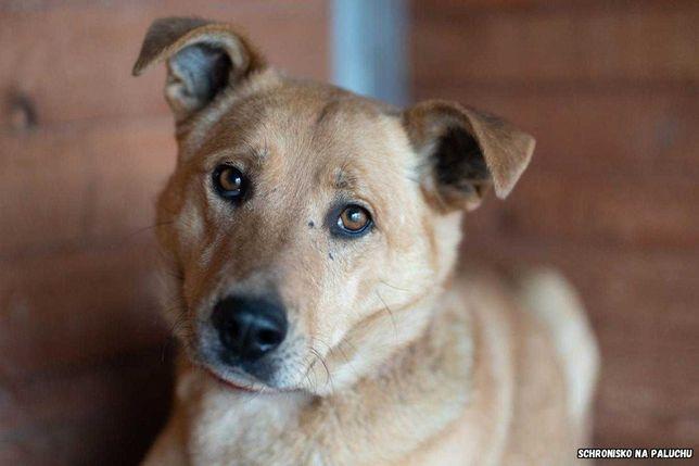Bolo, sławny pies warszawski potrzebuje pomocy