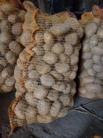 Sprzedam ziemniaki Vinieta 60 gr za kg