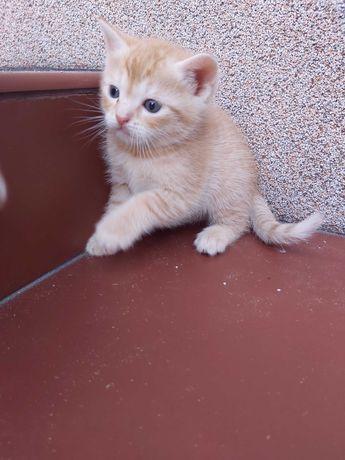 Małe kotki do oddania