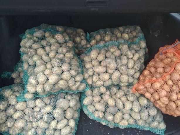 Młode ziemniaki Denar Satyna Wineta