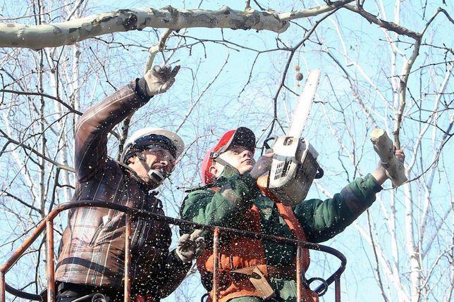 Зрізання дерев обрізка аварійних дерев, кронування, валка