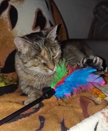 Merida, kotka po przejściach
